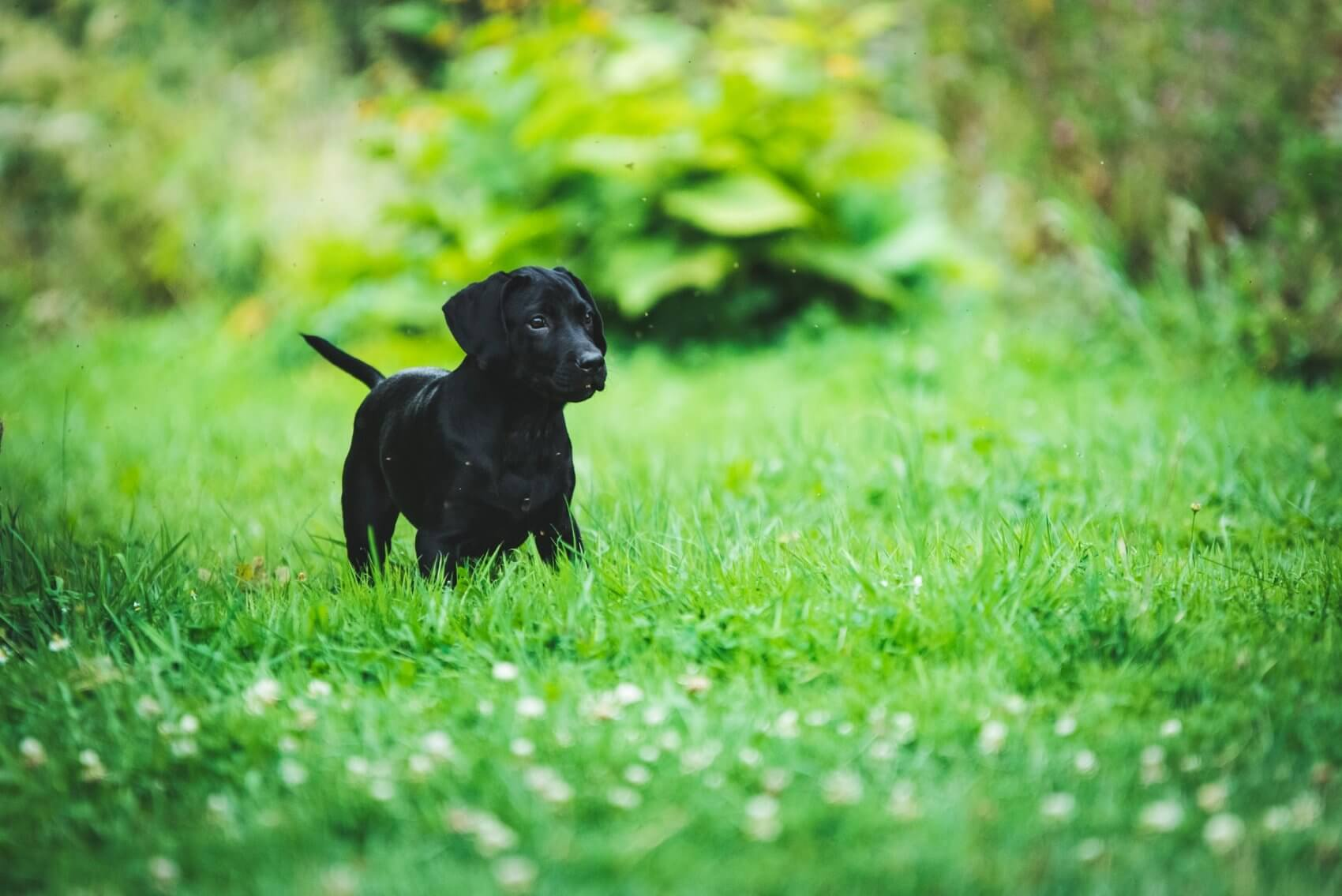 Small Black Puppy on Grass