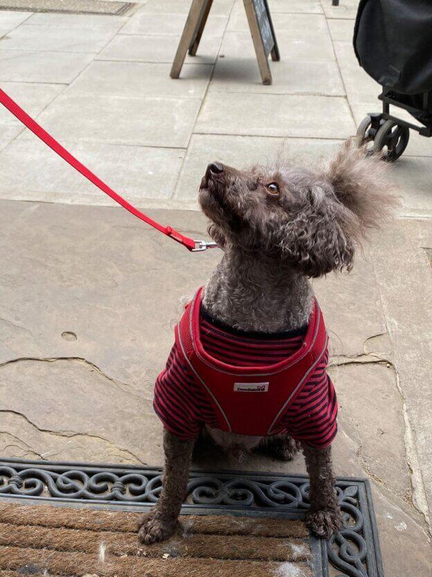 Hairy Hounds London