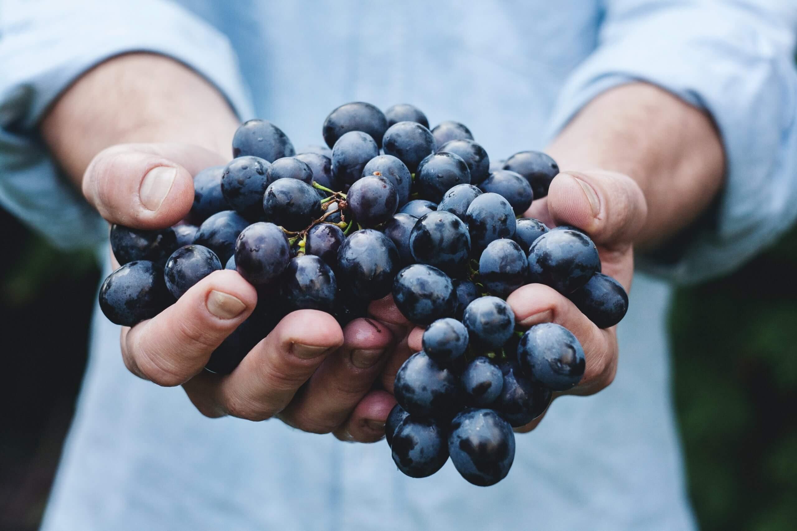 Vinagogo Wines